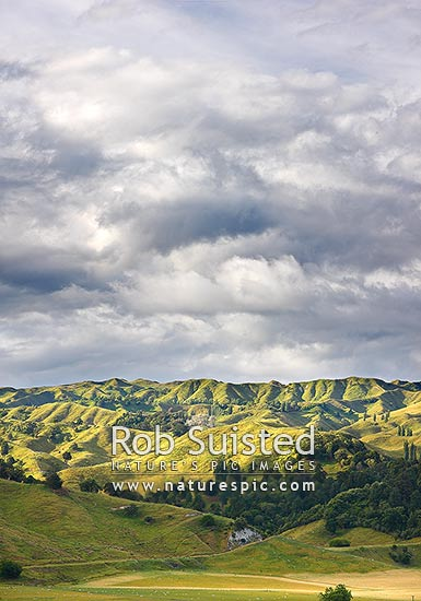Rolling hill farm country near Mangaweka with native bush and forest, below moody overcast skies, Mangaweka, Rangitikei District, Manawatu-Wanganui Region, New Zealand (NZ) stock photo.