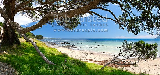 Waihau Bay through the limbs of an old Pohutukawa tree on a warm summers day. Panorama with lush grass and white sand beach, Waihau Bay, Opotiki District, Bay of Plenty Region, New Zealand (NZ) stock photo.