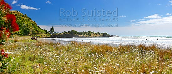 Onepoto Bay and Beach with family swimming and bodyboarding in surf. Summertime panorama with flowering pohutukawa, Hicks Bay, Gisborne District, Gisborne Region, New Zealand (NZ) stock photo.