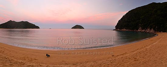 Abel Tasman sunset at Onetahuti Beach, with Tonga Island and Reef Point (left) beyond. Tonga Roadstead. Fishing boat moored in bay and Paradise Shelduck on beach. Panorama, Abel Tasman National Park, Tasman District, Tasman Region, New Zealand (NZ) stock photo.