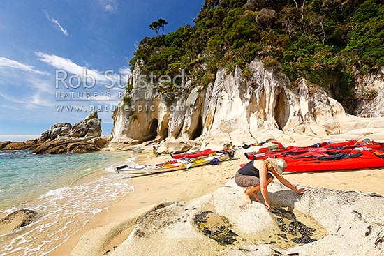 Abel Tasman coast at Tonga Arches, or Arch Point with sea kayaks and kayakers. Summertime. Woman investigating small mussels growing in intertidal rockpools, Abel Tasman National Park, Tasman District, Tasman Region, New Zealand (NZ) stock photo.