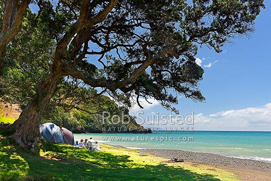 Beach campsite. Family group enjoying summertime holiday tent camping on the beach at DOC campsite under Pohutukawa tree forest with rope swing, Fletcher Bay, Thames-Coromandel District, Waikato Region, New Zealand (NZ) stock photo.