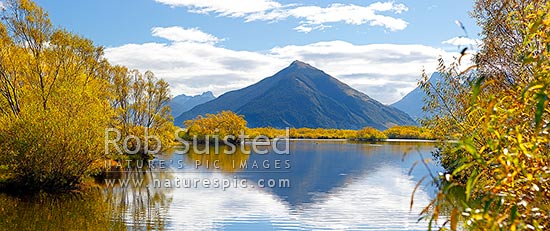 Mount Alfred / ari (1375m) above willow tree lined wetland and ponds, Glenorchy walkway with Black swans feeding (Cygnus atratus). Panorama, Glenorchy, Queenstown Lakes District, Otago Region, New Zealand (NZ) stock photo.