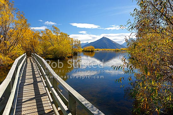 Mount Alfred / ari (1375m) above willow tree lined wetland and ponds, Glenorchy walkway in autumn colours, Glenorchy, Queenstown Lakes District, Otago Region, New Zealand (NZ) stock photo.