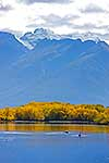 Autumn colours by lake, Glenorchy