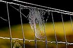 Cobwebs on wire fence