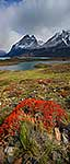 Bright red flora of Chilean Fiords