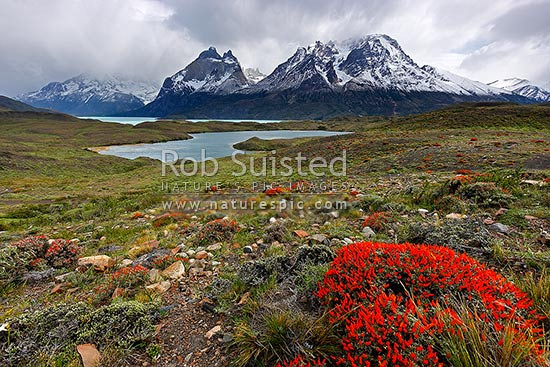 The Cordillera del Paine in Torres del Paine National Park, with Nordenskjöld Lake (Lago Nordenskjol). Chilean Patagonia, Puerto Natales, Chile stock photo.