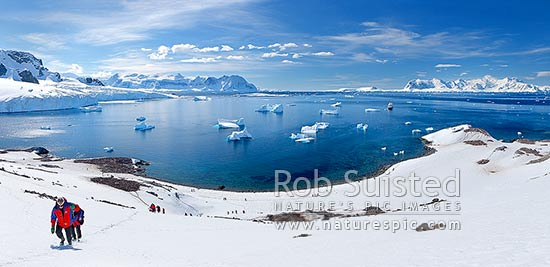 Tourist visitors from Silversea Prince Albert II ship visiting Cuverville Island and climbing now slope. Penguin colonies, icebergs and ship below. Panorama, Cuverville Island, Antarctic Peninsula, Antarctica Region, Antarctica stock photo.
