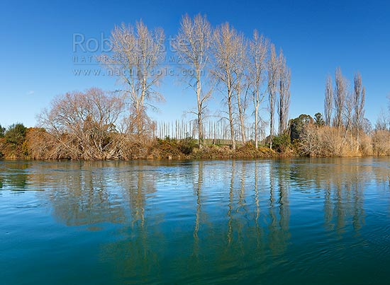 Waikato River passing through willow tree lined banks and farmland, in mid winter. Summer winter comparision shots available (35996fr00, 39607fr00 etc), Mihi, Rotorua, Rotorua District, Bay of Plenty Region, New Zealand (NZ) stock photo.