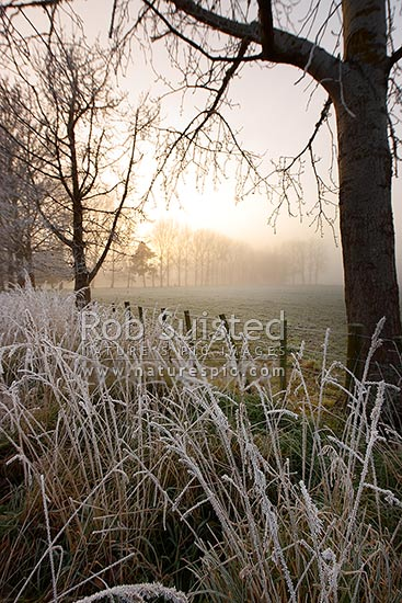 Hoar-frost covering trees, pasture and fence on frosty wintery morning at sunrise, Waikato, Golden Springs, Rotorua District, Bay of Plenty Region, New Zealand (NZ) stock photo.