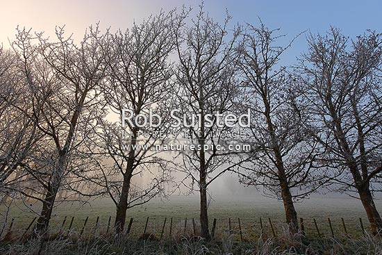 Trees and farmland covered in hoar-frost, on frosty winter morning, Waikato, Golden Springs, Rotorua District, Bay of Plenty Region, New Zealand (NZ) stock photo.