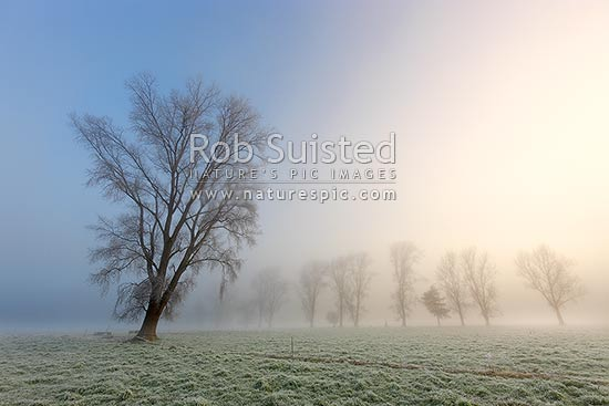 Hoar-frost glistening on trees and grass on winter frosty misty moody morning in farmland, Waikato, Golden Springs, Rotorua District, Bay of Plenty Region, New Zealand (NZ) stock photo.