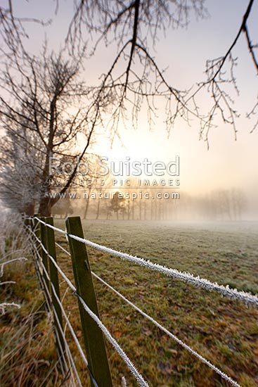 Hoar-frost in winter, Waikato, Golden Springs, Rotorua District, Bay of Plenty Region, New Zealand (NZ) stock photo.