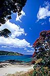 Summer at Maitai Bay, Northland