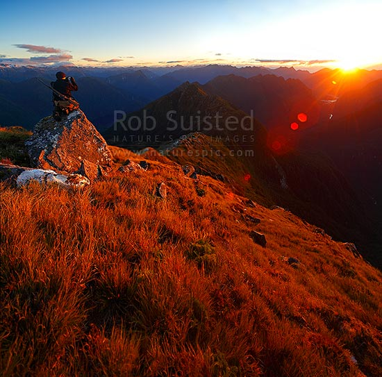 Deer hunter on Edith-George River tussock tops at sundown, Edith River and Lake Alice left, George River and Sound right. Glaisnock Wilderness Area, Fiordland National Park, Southland District, Southland Region, New Zealand (NZ) stock photo.