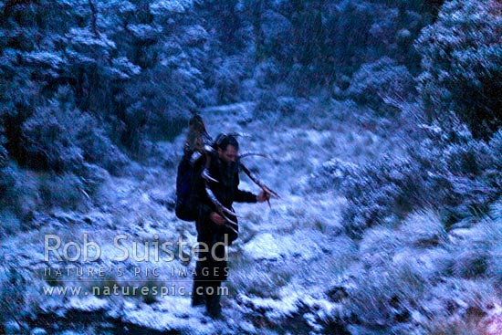 Deer hunter carrying trophy wapiti antlers in a miserable snowstorm through moody beech forest in the moonlight after dusk. Blurred by darkness, Fiordland National Park, Southland District, Southland Region, New Zealand (NZ) stock photo.
