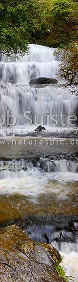 Waterfall cascading over several falls into pool. Purakaunui River falls. Massive vertical panorama, Catlins, Clutha District, Otago Region, New Zealand (NZ) stock photo.