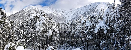 Bealey River valley near Arthur's Pass summit under heavy winter snowfall. Panorama, Arthur's Pass National Park, Selwyn District, Canterbury Region, New Zealand (NZ) stock photo.