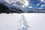 Walkers tracks, Southern Alps