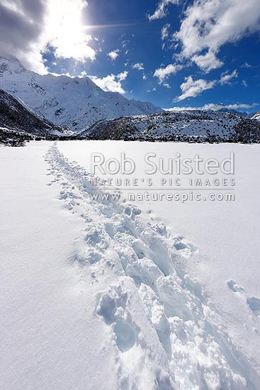 Kea Point track walk in winter with heavy snowfall. Walkers tracks through snow with Mount Sefton above on the southern alps Main Divide, Aoraki / Mount Cook National Park, MacKenzie District, Canterbury Region, New Zealand (NZ) stock photo.