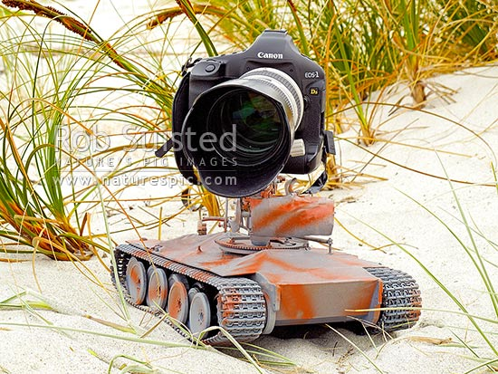 TankCam, a remote controlled vehicle built by Rob Suisted to film nesting New Zealand Fairy Terns (Sterna nereis davisae), NZ's rarest bird, also known as tara-iti, New Zealand (NZ) stock photo.