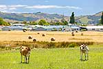 Country meets urban, Coromandel