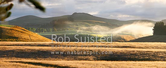 Farmland with early morning mist over rolling hills and pasture at dawn. Panorama, The Key, Te Anau, Southland District, Southland Region, New Zealand (NZ) stock photo.