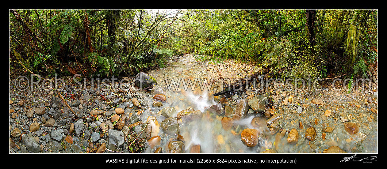 Image of Crystal clear forest river running through rainforest and tree ferns. Massive panorama file, Ross, Westland District, West Coast Region, New Zealand (NZ) stock photo image