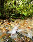 Clean clear forest stream, Westland