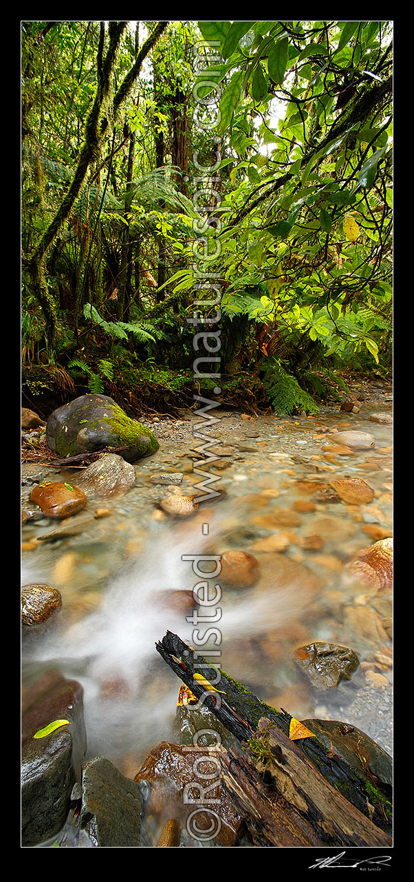 Image of Crystal clear forest river running through lush rainforest, tree ferns and supplejack. Vertical panorama format, Ross, Westland District, West Coast Region, New Zealand (NZ) stock photo image