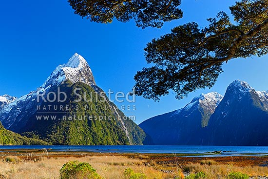 Mitre Peak in Milford Sound. Mitre Peak left (1683m), The Lion (1302m) right, under beech trees, Milford Sound, Fiordland National Park, Southland District, Southland Region, New Zealand (NZ) stock photo.