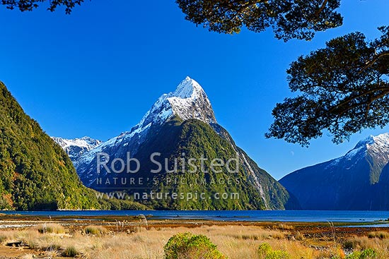 Mitre Peak in Milford Sound. Mitre Peak left (1683m), under beech trees, Milford Sound, Fiordland National Park, Southland District, Southland Region, New Zealand (NZ) stock photo.