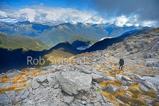 Looking across the Haast River valley from the Thomas Range. Tramper / hunter walking down Midnight ridge from near Mount Swindle (1588m). The Roaring Billy Valley left, Haast, Westland District, West Coast Region, New Zealand (NZ) stock photo.