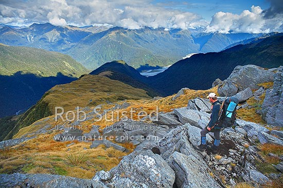 Looking across the Haast River valley from the Thomas Range. Tramper / hunter looking down Midnight ridge from near Mount Swindle (1588m). The Roaring Billy Valley left, Haast, Westland District, West Coast Region, New Zealand (NZ) stock photo.