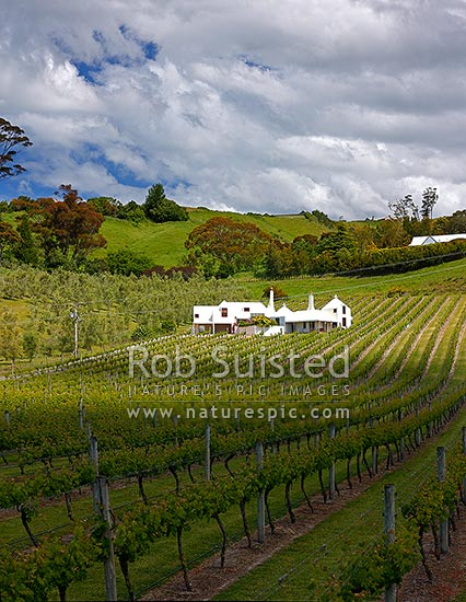 Coleraine House or 'Buck House' landmark amongst vineyards of Te Mata Estate. House designed by Ian Athfield & built 1980, Havelock North, Hastings District, Hawke's Bay Region, New Zealand (NZ) stock photo.