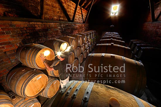 Checking barrels in Te Mata Estate old historic brick cellar, Havelock North, Hastings District, Hawke's Bay Region, New Zealand (NZ) stock photo.