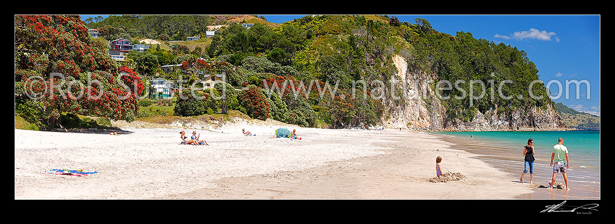Image of Hahei Beach with a family, sunbathers and swimmers enjoying the sunny summers day. Pohutukawa trees flowering and an azure blue sea. Panorama, Hahei, Coromandel Peninsula, Thames-Coromandel District, Waikato Region, New Zealand (NZ) stock photo image