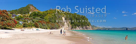 Hahei Beach with a family, sunbathers and swimmers enjoying the sunny summers day. Pohutukawa trees flowering and an azure blue sea. Panorama, Hahei, Coromandel Peninsula, Thames-Coromandel District, Waikato Region, New Zealand (NZ) stock photo.