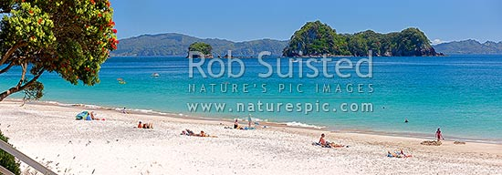 Hahei Beach. Families, sunbathers, kayakers, boaties and swimmers enjoying the summers day. Pohutukawa trees flowering with Mahurangi (Goat) Island beyond. Panorama, Hahei, Coromandel Peninsula, Thames-Coromandel District, Waikato Region, New Zealand (NZ) stock photo.