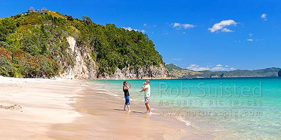 Hahei Beach with a family enjoying and photographing the sunny summers day. Pohutukawa trees flowering and an azure blue sea. Panorama, Hahei, Coromandel Peninsula, Thames-Coromandel District, Waikato Region, New Zealand (NZ) stock photo.