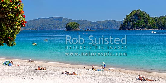 Hahei Beach. Families, sunbathers, kayakers, boaties and swimmers enjoying the summers day, with Pohutukawa trees flowering. Panorama, Hahei, Coromandel Peninsula, Thames-Coromandel District, Waikato Region, New Zealand (NZ) stock photo.