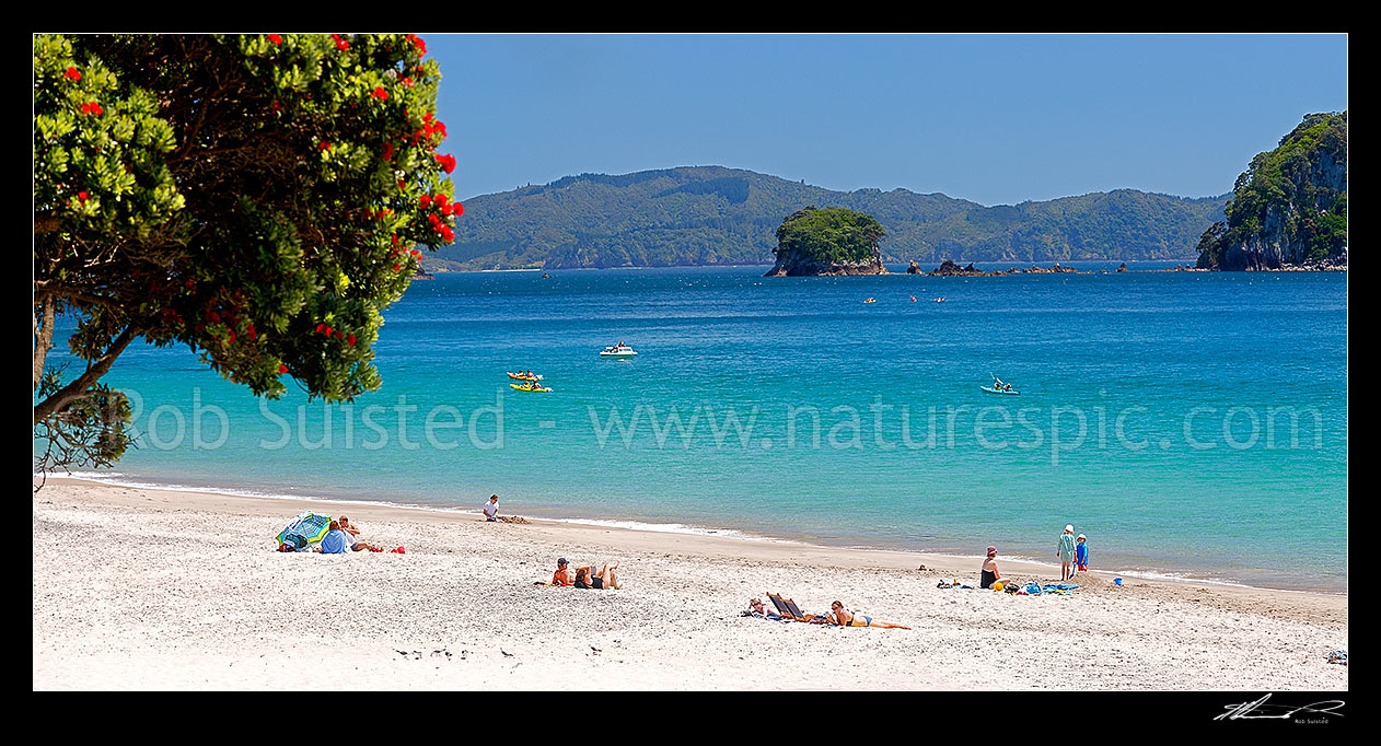 Image of Hahei Beach. Families, sunbathers, kayakers, boaties and swimmers enjoying the summers day, with Pohutukawa trees flowering. Panorama, Hahei, Coromandel Peninsula, Thames-Coromandel District, Waikato Region, New Zealand (NZ) stock photo image