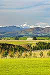 North Canterbury vineyards