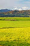 Kaikoura ranges behind farmland