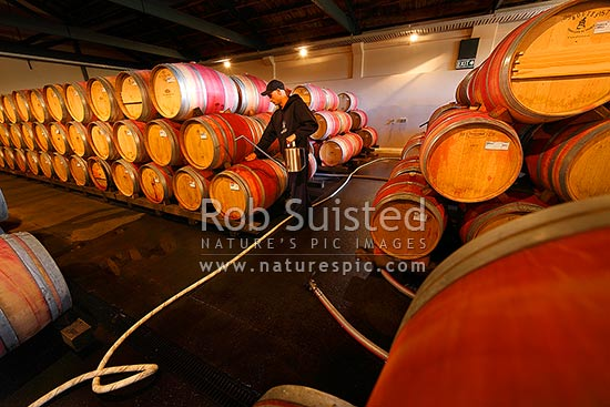 Te Mata Estate oak wine barrels stacked aging in cellar, being checked by wine maker, Havelock North, Hastings District, Hawke's Bay Region, New Zealand (NZ) stock photo.