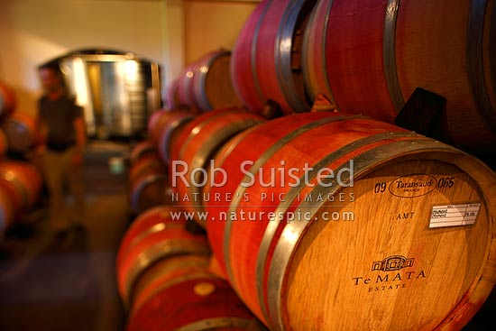 Te Mata Estate oak wine barrels stacked aging in cellar, Havelock North, Hastings District, Hawke's Bay Region, New Zealand (NZ) stock photo.