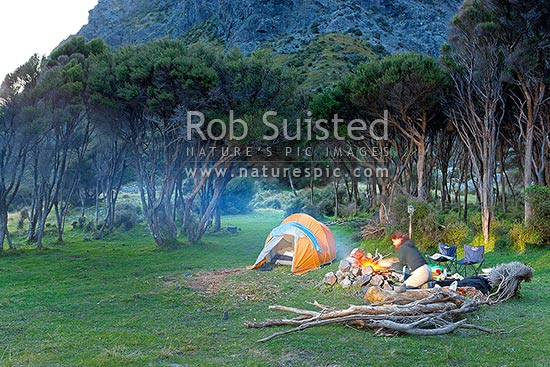 Holiday tent camping, with a woman preparing a fire for cooking and bbq in evening light, amongst manuka forest and grassland, near the coast, Cape Palliser, South Wairarapa District, Wellington Region, New Zealand (NZ) stock photo.