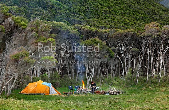 Holiday tent camping, with a woman cooking and bbq dinner on open fire, amongst manuka forest and grassland, near the coast, Cape Palliser, South Wairarapa District, Wellington Region, New Zealand (NZ) stock photo.