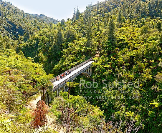 The Bridge to Nowhere, Mangapurua Stream and valley. Historic bridge and popular tourist destination. 38m high, built in 1936. Square format, Whanganui National Park, Wanganui District, Manawatu-Wanganui Region, New Zealand (NZ) stock photo.